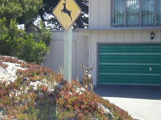 確かに鹿が出る